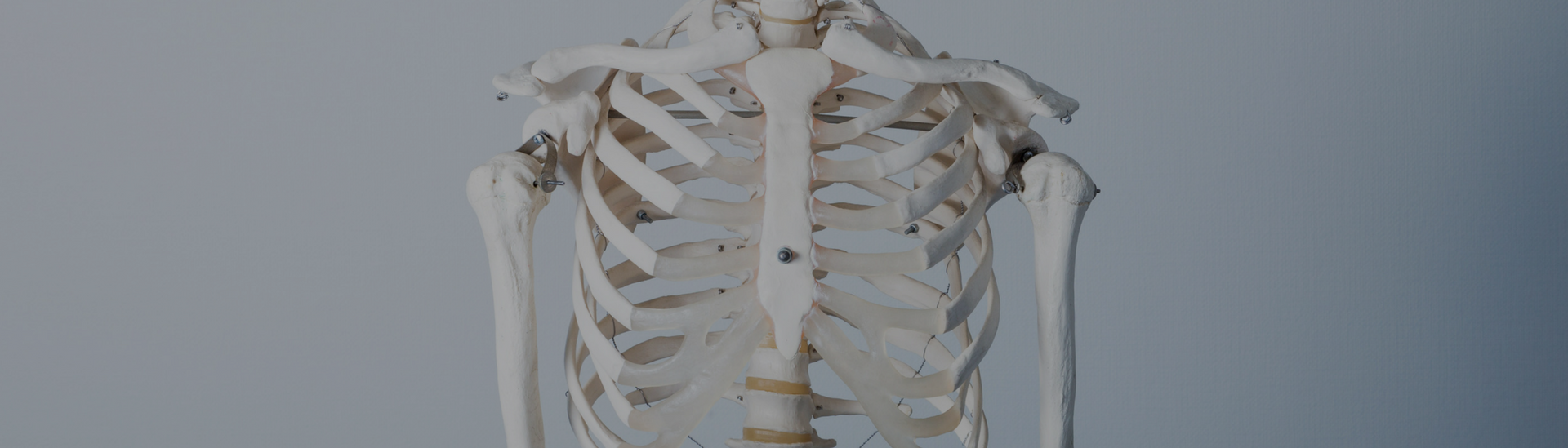 Anatomy Course - Studio Pilates